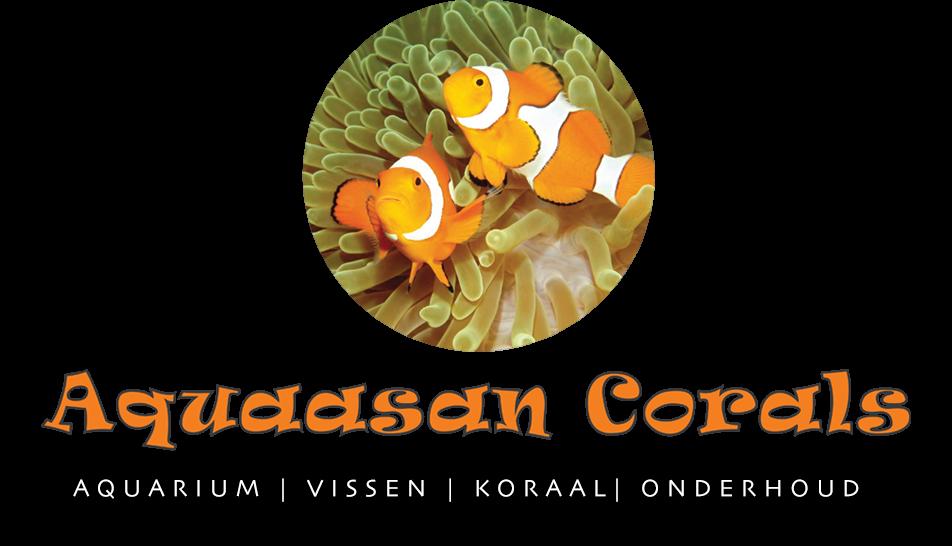 Aquaasan-corals